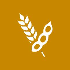 Les céréales biologiques d'Agribio Union, producteur de soja bio